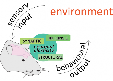 we study the interactions between organisms and the environment, and how neuronal plasticity is shaped by and shapes them.