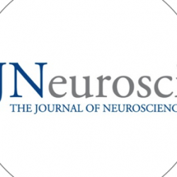Boosting glutamate reduces anxiety in monkeys