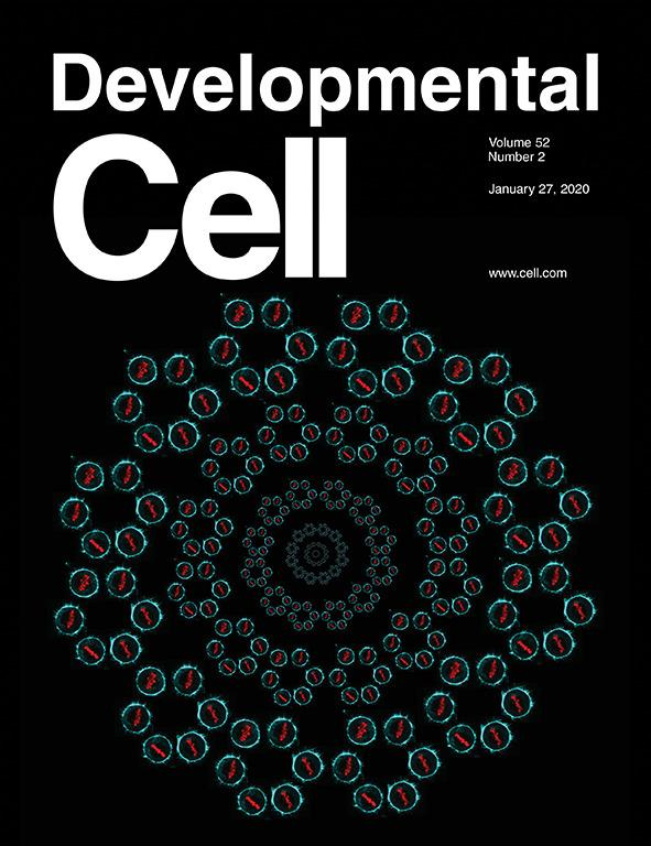 New study by Ewa Paluch's lab makes cover of Developmental Cell